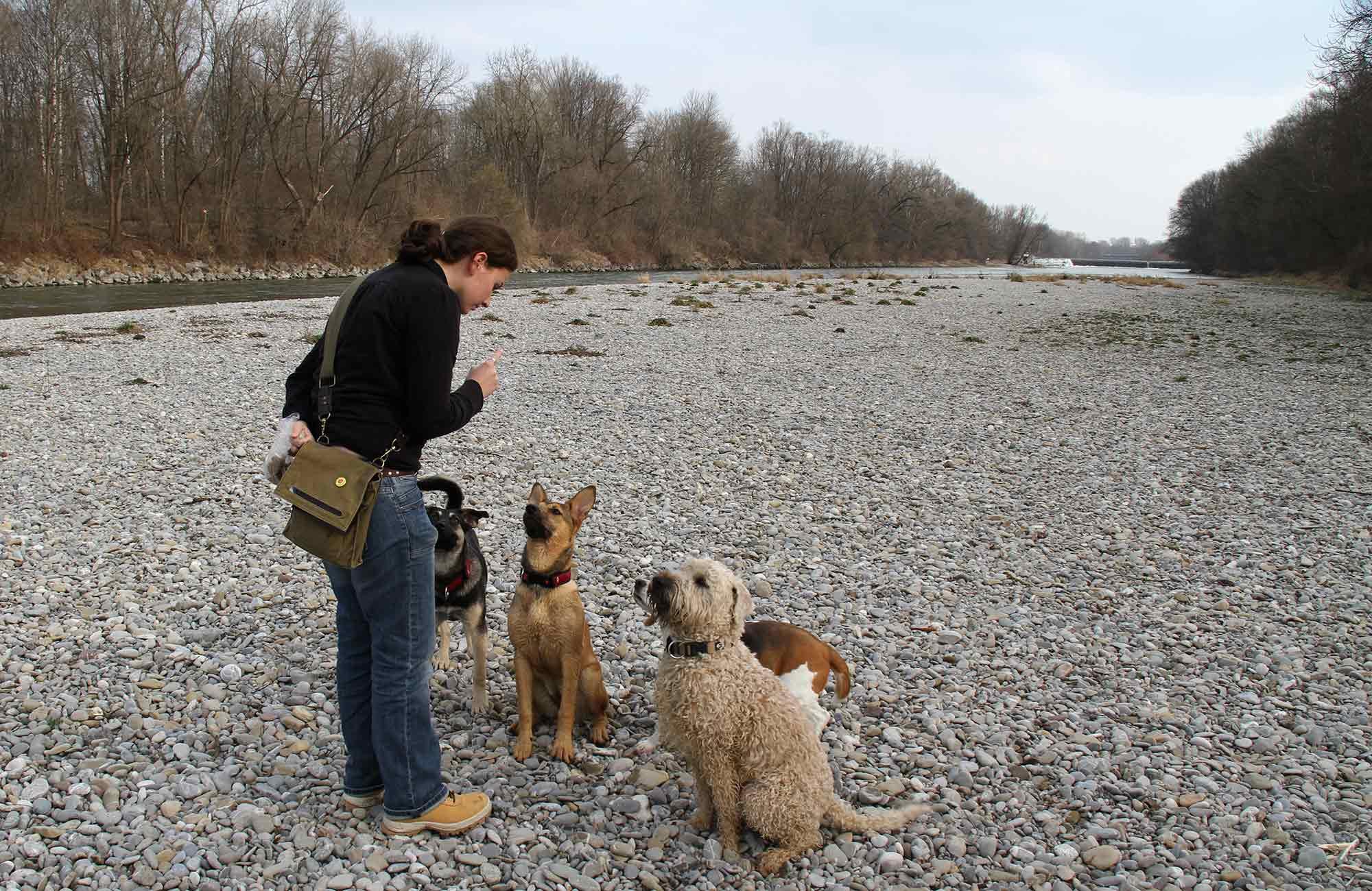 Einzeltraining Hundeschule