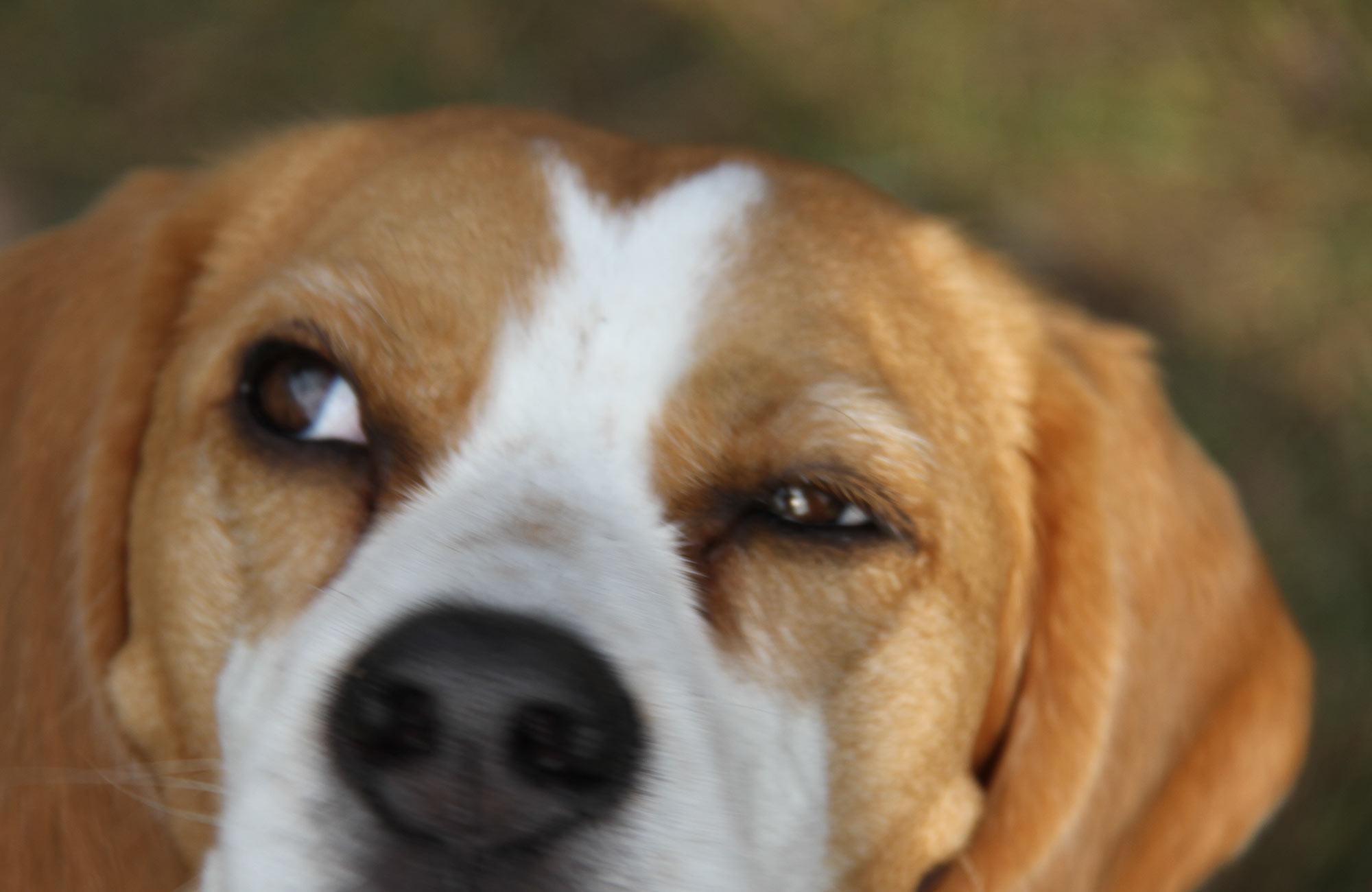 Schwieriger Hund Hundeschule