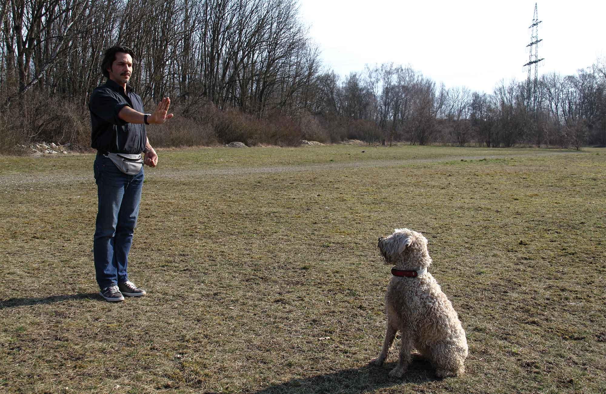 Hundeerziehung leise